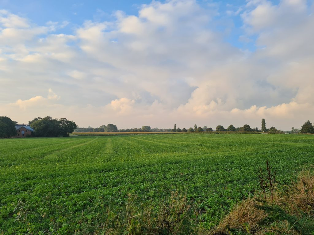 Landskabsbillede af mark